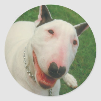 Bull Terrier Round Stickers
