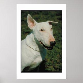 Bull Terrier White Dog Poster
