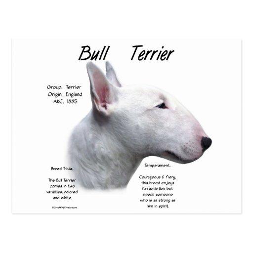 Bull Terrier (wht) History Design Postcard
