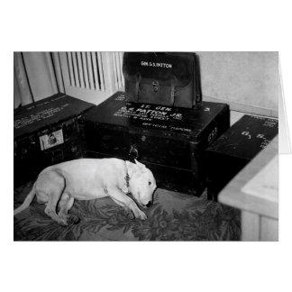 "Bull terrier ""Willie "" de general Patton Tarjeta Pequeña"