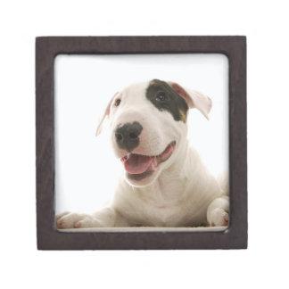 Bull Terriers Keepsake Box