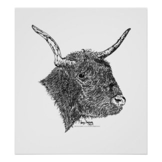 Bull with Horns Pen and Ink Drawing Poster
