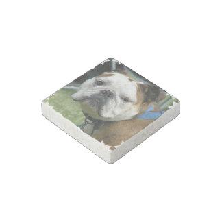 bulldog-19 stone magnet