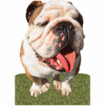 Bulldog Acrylic Cut Out