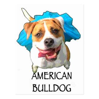 bulldog american postcard