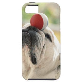 Bulldog balancing ball on snout, close-up iPhone SE/5/5s case