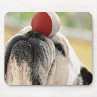 Bulldog balancing ball on snout, close-up mouse pad