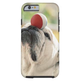 Bulldog balancing ball on snout, close-up tough iPhone 6 case