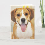 Bulldog-Beagle Mix Photo Card
