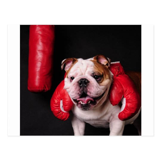 Bulldog Boxer Postcard