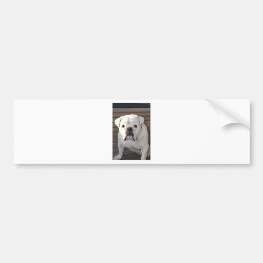 Bulldog Bumper Sticker