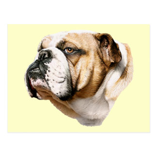 Bulldog Bust Postcard