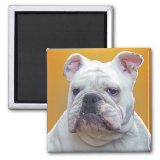 Bulldog close-up 2 inch square magnet