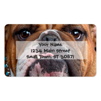 Bulldog English Bad Face Pack Of Standard Business Cards
