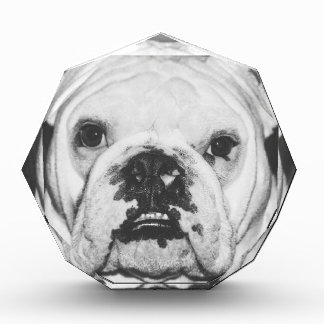 Bulldog Face Acrylic Award