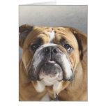 Bulldog Face - English Bulldog, Brown Card