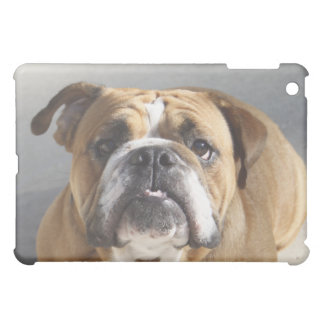 Bulldog Face - English Bulldog, Brown iPad Mini Cover