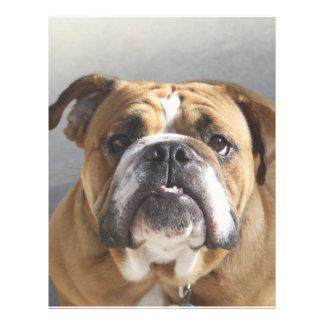 Bulldog Face - English Bulldog, Brown Letterhead