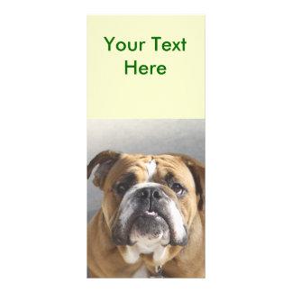 Bulldog Face - English Bulldog, Brown Custom Rack Cards