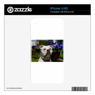 Bulldog Flowers Skins For The iPhone 4