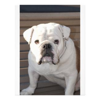 Bulldog Flyer