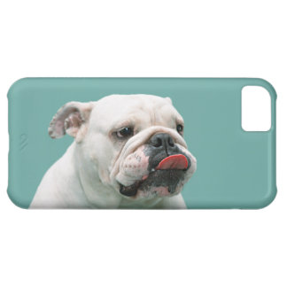 Bulldog funny face with tongue sticking out, gift case for iPhone 5C