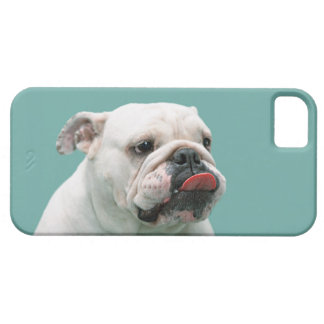 Bulldog funny face with tongue sticking out, gift iPhone 5 case