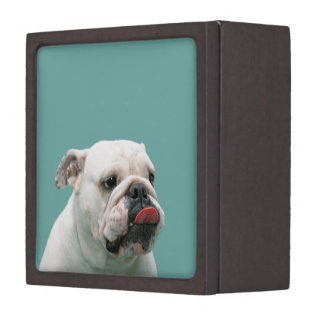 Bulldog funny face with tongue sticking out, gift jewelry box