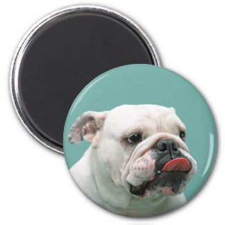 Bulldog funny face with tongue sticking out, gift 2 inch round magnet