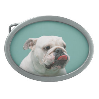 Bulldog funny face with tongue sticking out, gift oval belt buckle