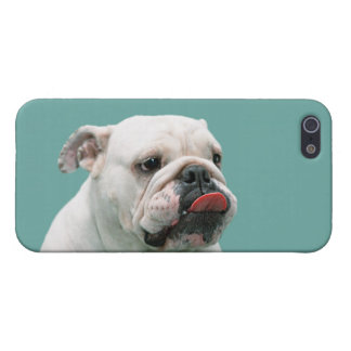 Bulldog funny face with tongue sticking out photo case for iPhone SE/5/5s