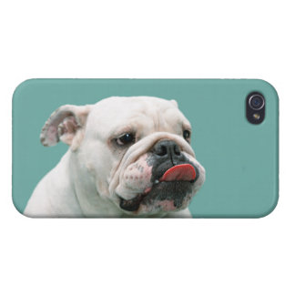 Bulldog funny face with tongue sticking out photo iPhone 4/4S case