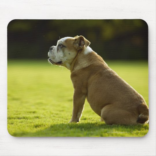 Bulldog in field mouse pad