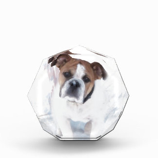 Bulldog In The Snow Award