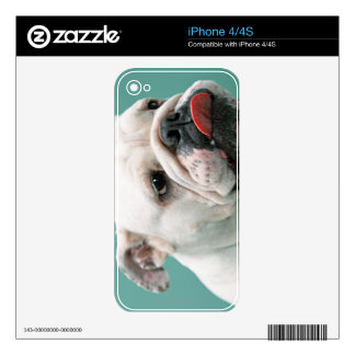 Bulldog iPhone 4S Decal