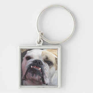 bulldog key chain funny photo
