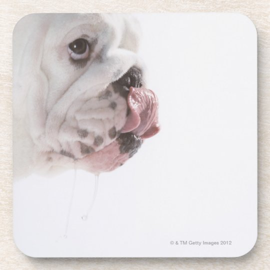 Bulldog Licking Beverage Coaster
