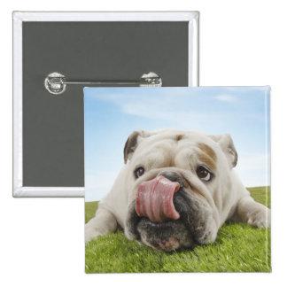 Bulldog Lying on Grass Licking Lips Button
