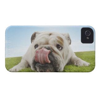 Bulldog Lying on Grass Licking Lips iPhone 4 Case