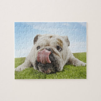 Bulldog Lying on Grass Licking Lips Jigsaw Puzzle