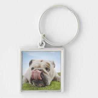 Bulldog Lying on Grass Licking Lips Keychain