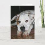 Bulldog-Mastiff Mix Photo Card