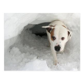 Bulldog-Mastiff Mix Photo Post Card