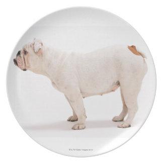 Bulldog Melamine Plate