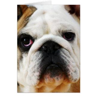 Bulldog Note Card