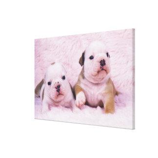 Bulldog; often called the English Bulldog. Is a Canvas Print