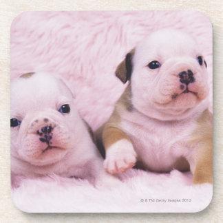 Bulldog; often called the English Bulldog. Is a Beverage Coasters
