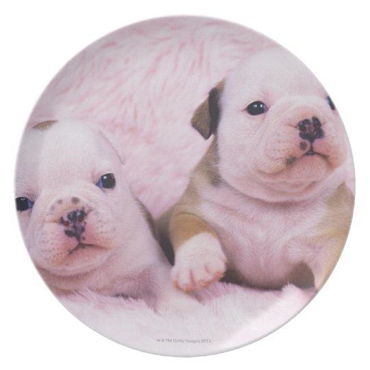 Bulldog; often called the English Bulldog. Is a Dinner Plate