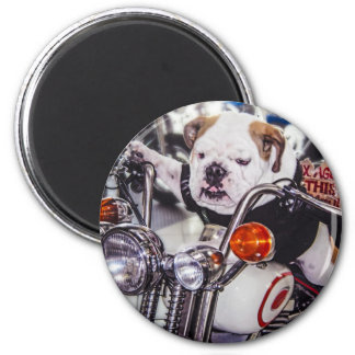 Bulldog on Motorcycle 2 Inch Round Magnet