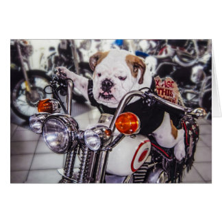Bulldog on Motorcycle Card